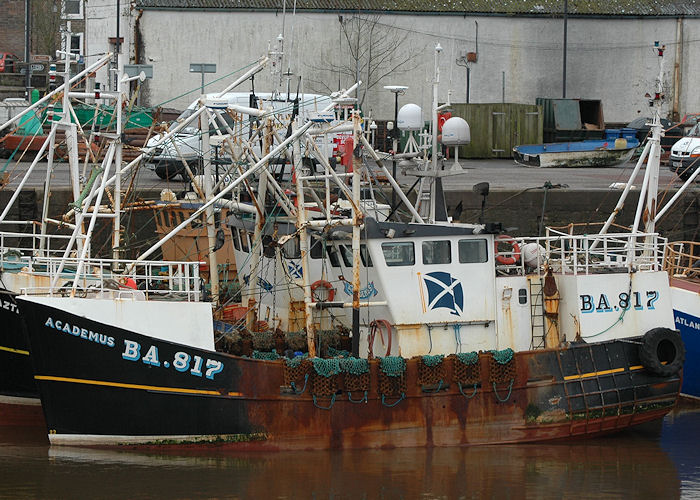 Academus pictured at Kirkcudbright on 12th March 2011