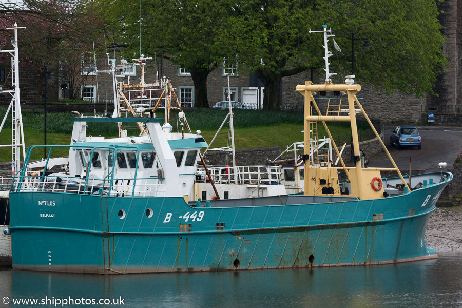 Mytilus pictured at Kirkcudbright on 2nd May 2015