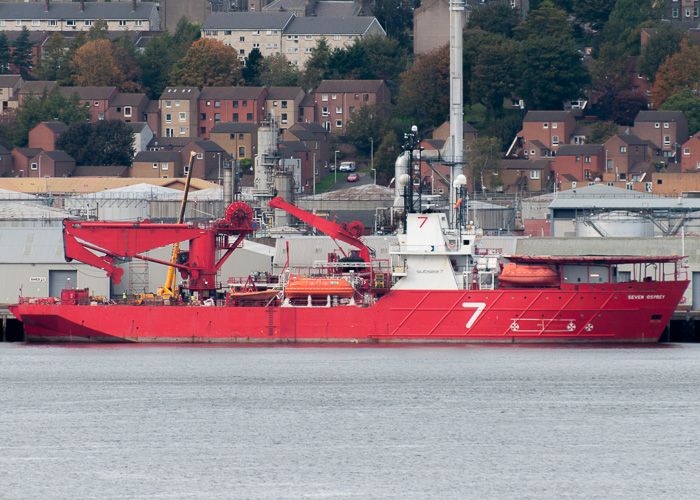 Seven Osprey pictured at Dundee on 13th October 2014